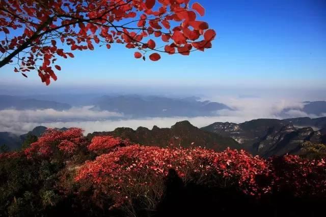 """""""欣赏原生态红叶,体验刺激高空栈道"""",明堂山第三届红叶节就要开始啦!"""