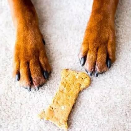 云南白药粉怎么用_给狗狗剪指甲出血了-宠物