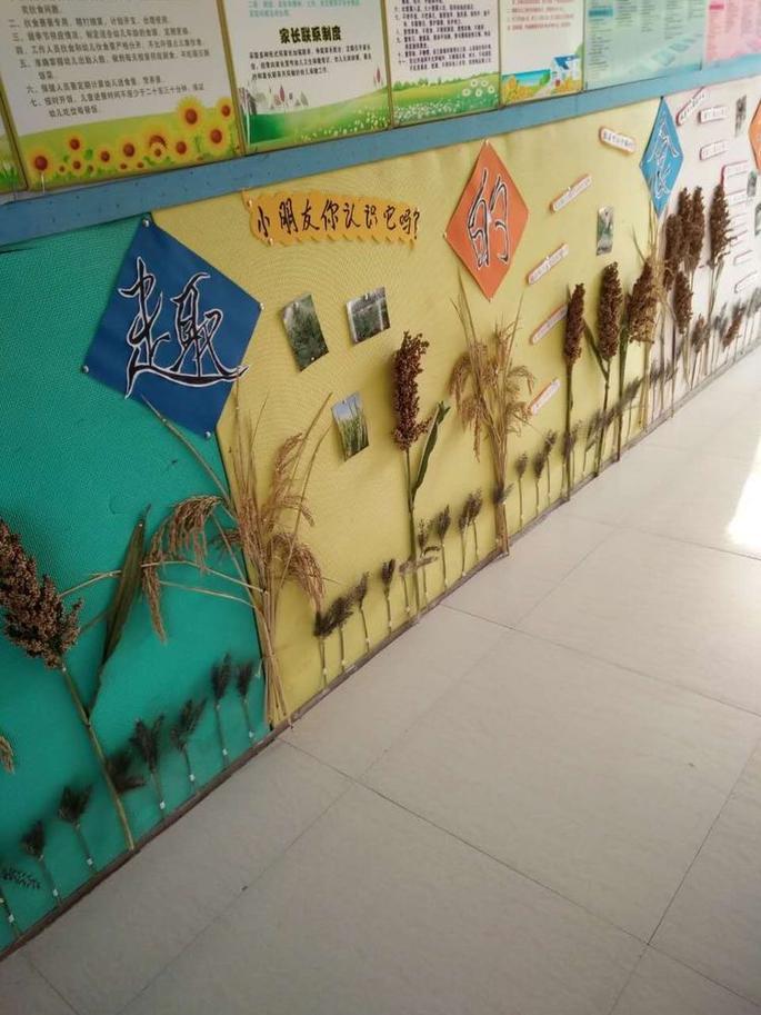 毛店幼儿园:小环境 大自然