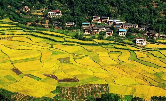 重庆最新最全赏油菜花线路推荐,这个春天畅游花海全靠