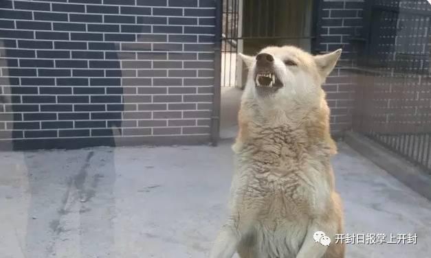 好消息!汴京公园动物园正式对外开放啦!