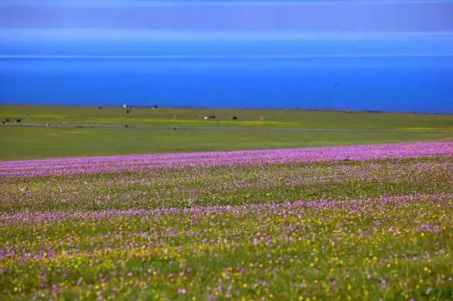 这个时候租一辆自行车,在蓝天白云和香风中,沿着田边缓缓骑过,也许你